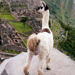 Machu Picchu libre de Envases Descartables
