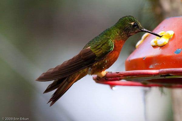 Inkaterra Big Birding Day