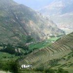 Siembran de 3 millones de árboles en Valle Sagrado