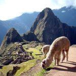 En mayo el turismo en Cusco estará al 100%