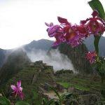 Conservación de orquídeas incentivará turismo en Machu Picchu