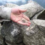 47 variedades de líquenes existen en Machu Picchu